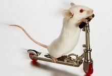 2-mouse2.jpg