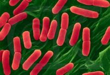 9567-bakterias3.jpg