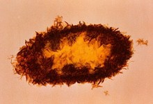 бактерии, поедающие пластик