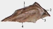 Сошник (левая сторона)