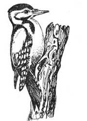 Питомники для птиц и всё а птицах