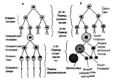 Схемы стабилизаторов напряжения 14
