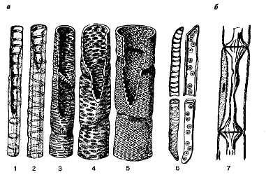 Паренхима основная ткань