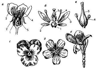 Как именуется цветок с малеханькими листочками