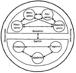 Определение биоценоза, характеристики